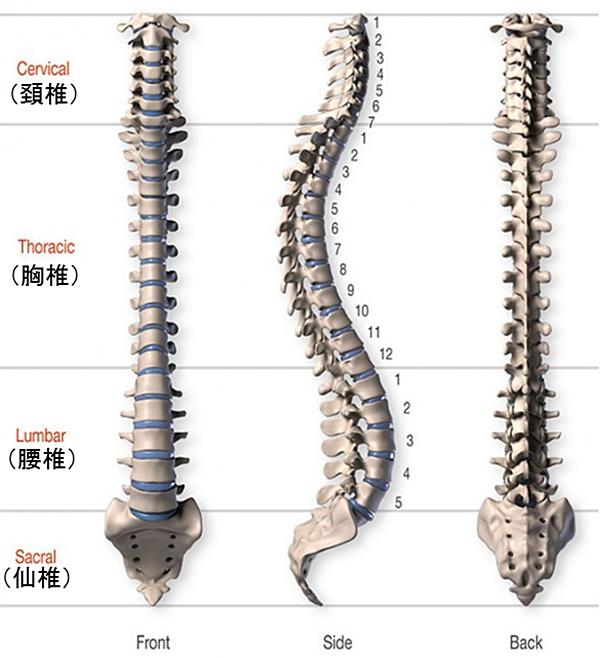 「体幹を捻る」とは? ~正しい体幹の回旋動作を習得して、ゴルフやテニスや野球のスイングを上達させましょう!!~